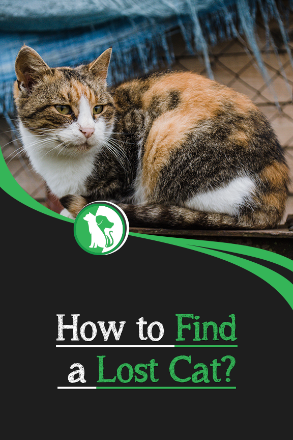How To Find A Lost Cat Lost Cat Losing A Pet Cats