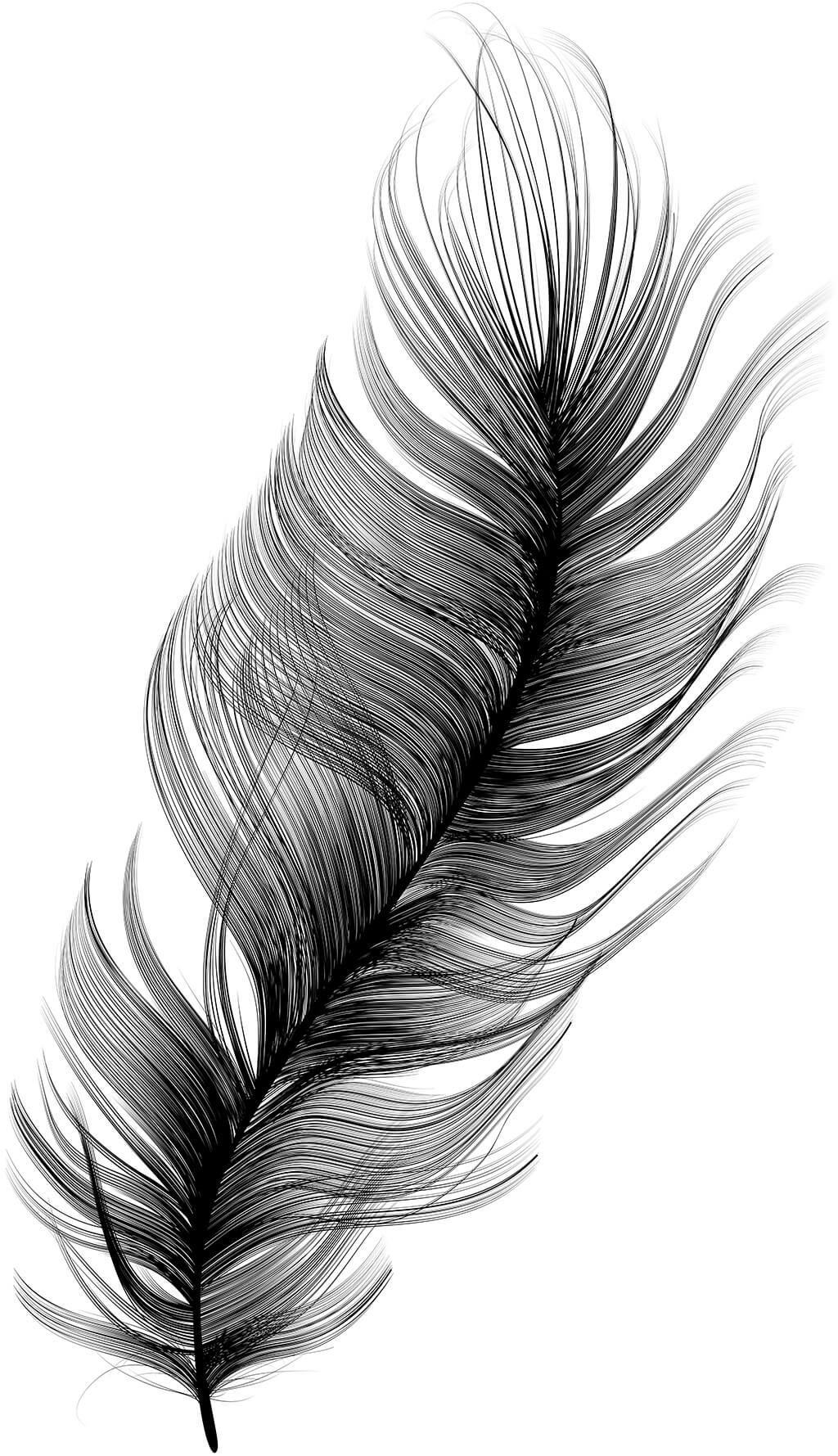 Vector Feather by Designer and Artist Maria Montes -  - #artist #Designer #feather #Maria #Montes #Vector