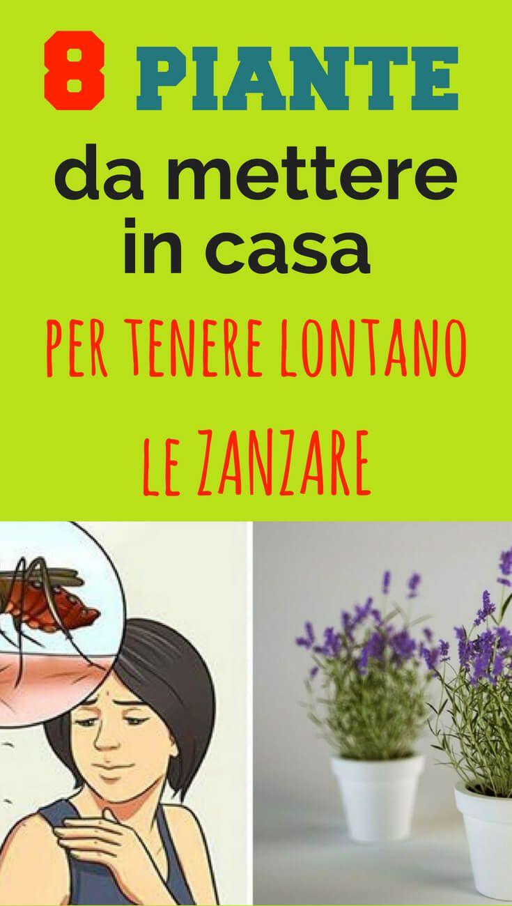 Piante Da Appartamento E Per Esterno Contro Le Zanzare.8 Piante Da Mettere In Casa Per Tenere Lontano Le Zanzare Verde