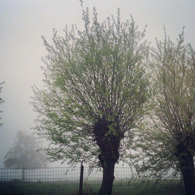 Vroege lentemist bij de Zwarte stok Riemst