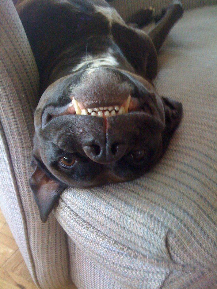 Silly puppy!!