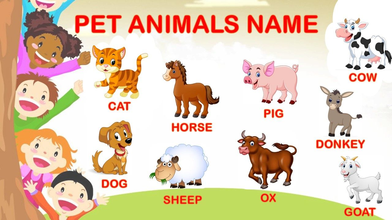 Set Of Various Pet Animal Face In A Square With Colorful Background Hamster Breeds Animal Faces Cartoon Animals