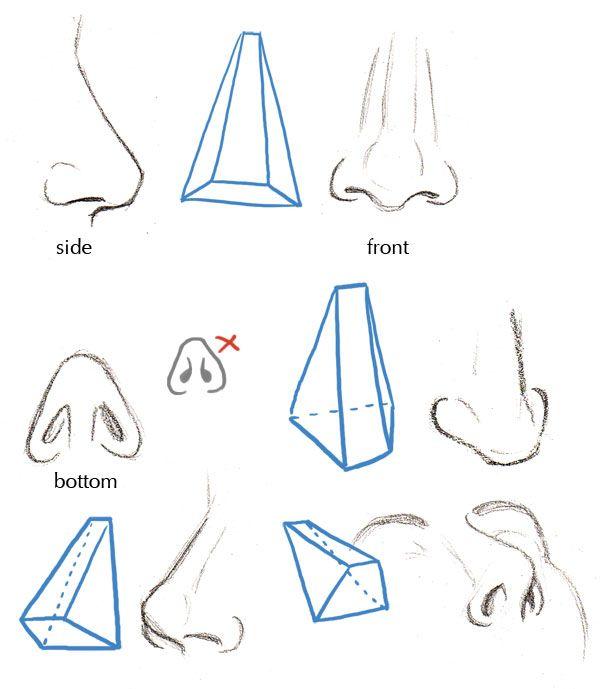 Human Anatomy Fundamentals Basics Of The Face Tuts Design