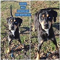 Jefferson City Tennessee Shepherd Unknown Type Meet Alberto A For Adoption Https Www