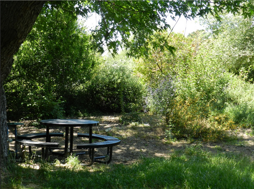 Taman Sekolah Dasar Desain Plant Nursery Garden Native Plants