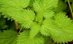 Esta Increíble Planta Te Ayudara A Prevenir El Cáncer De Próstata Y A Desinflamarla Remedios Salud Remedios Caseros