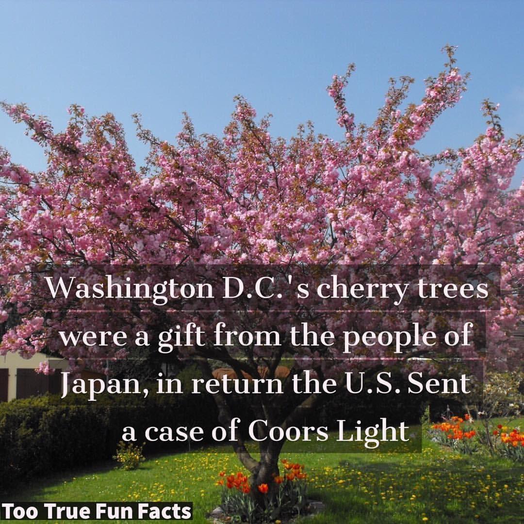 Too True Fun Facts On Instagram Fair Trade Washington Washingtondc Washington Dc Cherrytrees Pinkcherrytrees Cherryblossoms Trees Fun Facts Facts Fun