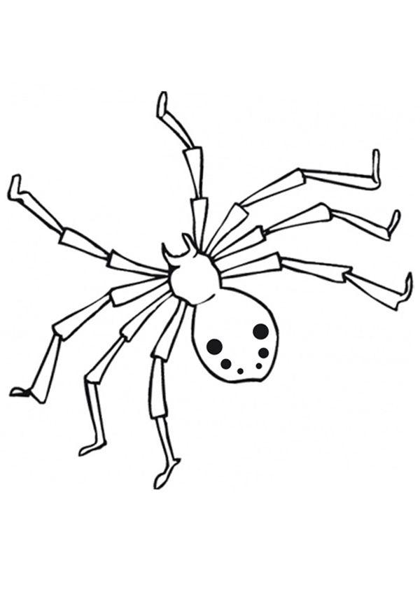 Cartoon Animals Spider Coloring Page