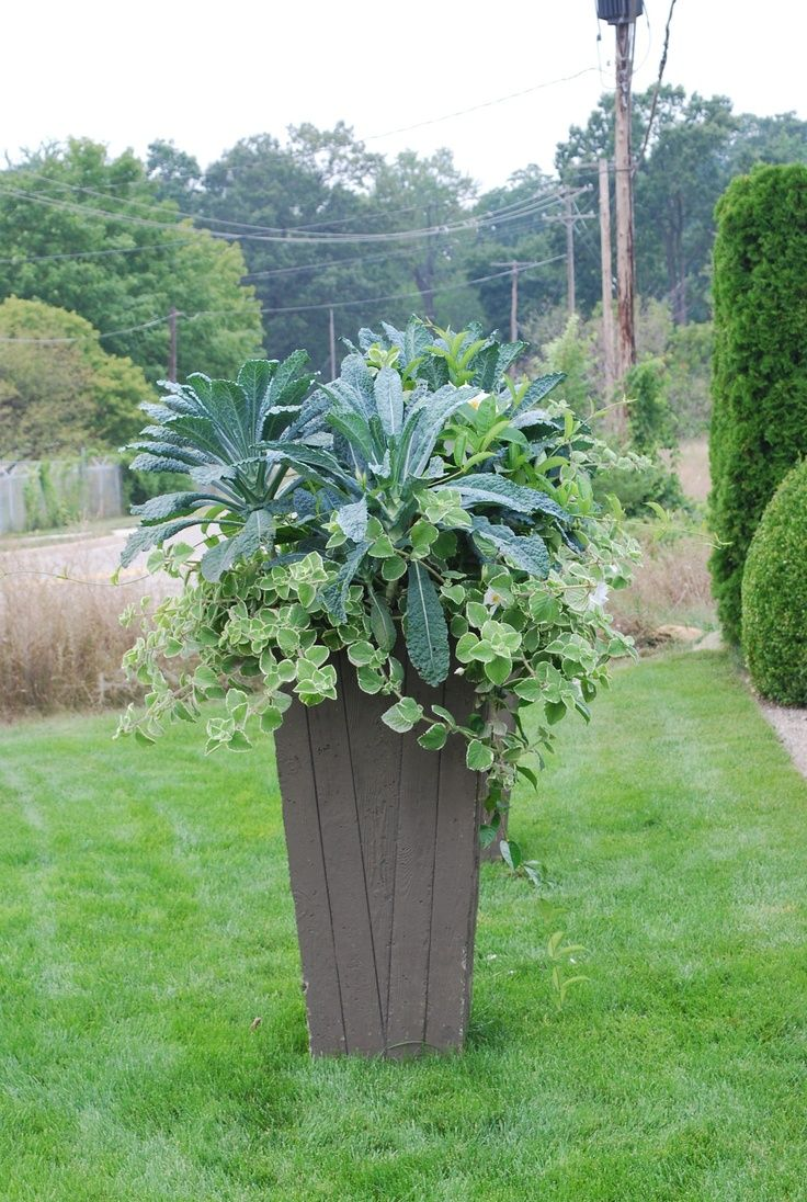 kale in containers - this is just perfect!
