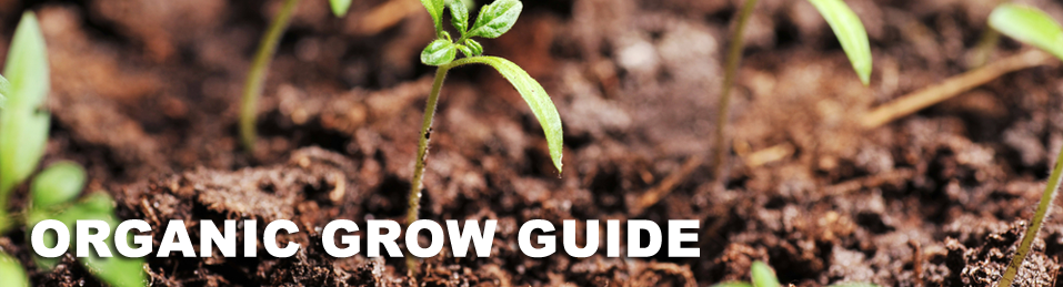 Grow Guide: awesome site to help the gardener out! Great site to order Organic, non GMO seeds!