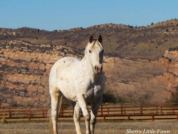 Colorado White Horse in Meadow Introspective by Attitudeheadbands