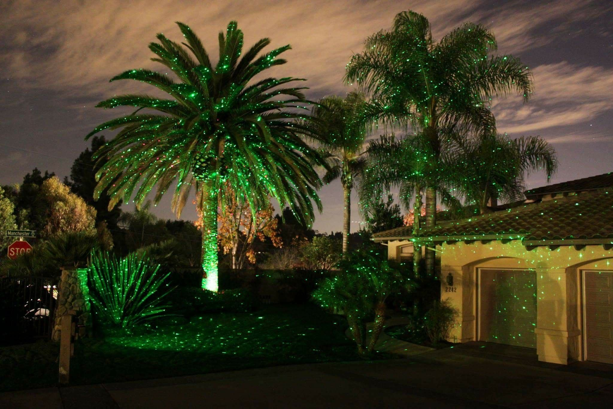 Palms with green bliss lights. So pretty!
