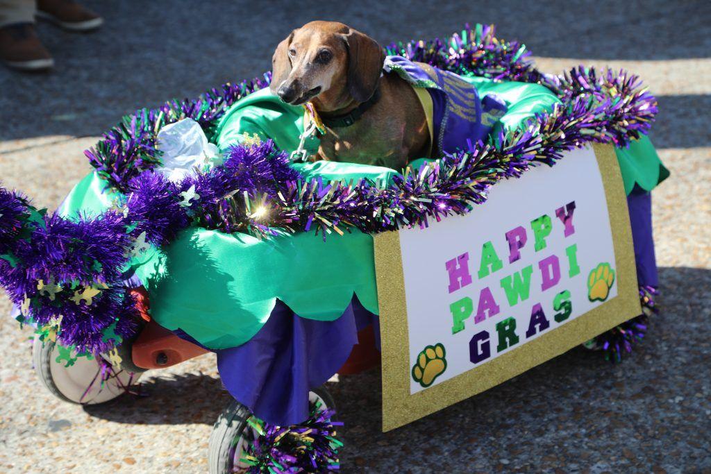 2017 Krewe Of Barkus Parade In Lake Charles Louisiana Krewe