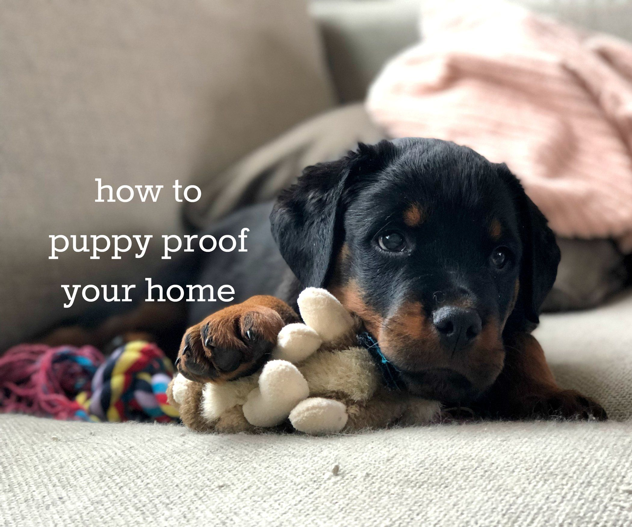 How to puppy proof your home puppy proofing puppies