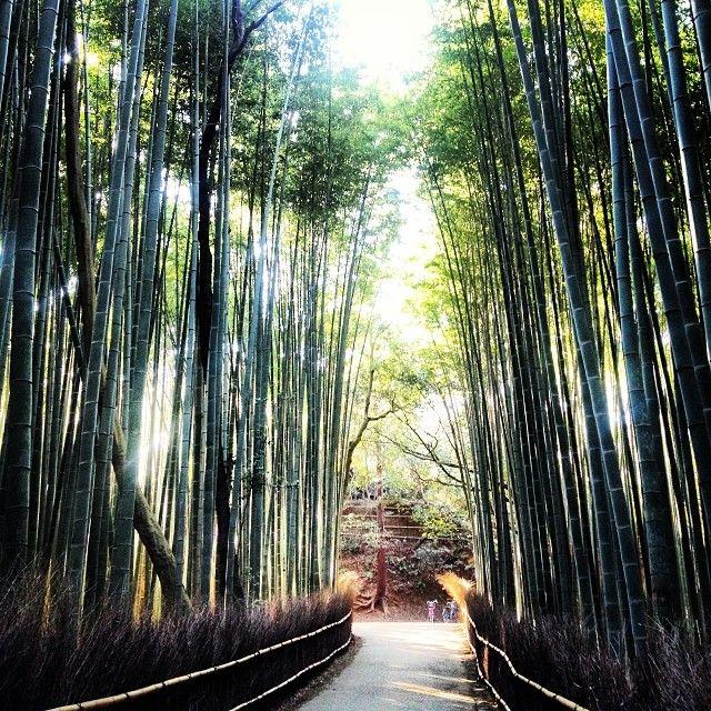 Arashiyama Bamboo Forest #Kyoto #Japan #TheWorldPursuit #follow4follow