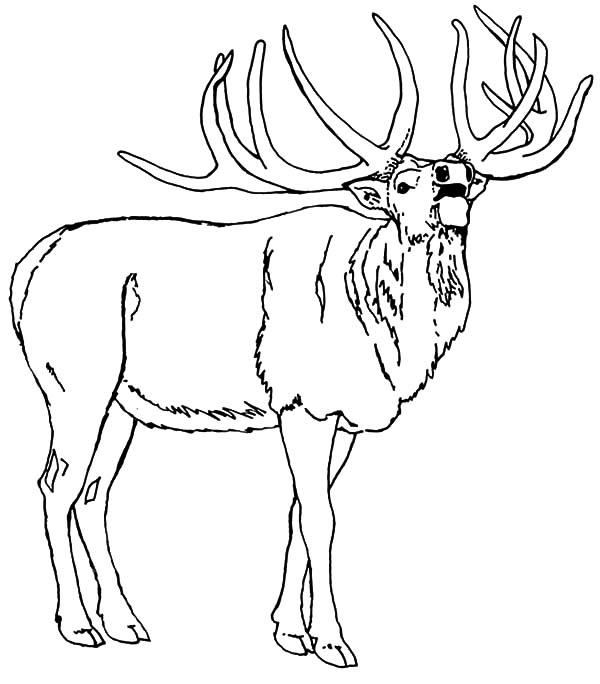 Deer Antlers Coloring Page Download You'll Love