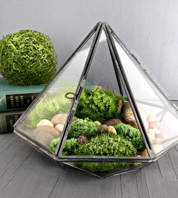 Geometric glass diamond terrarium with plants tiny moss gardens pinterest pflanzen garten - Gute zimmerpflanzen ...