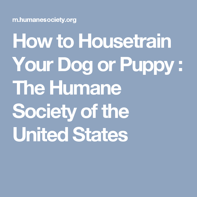 How To Housetrain Your Dog Or Puppy House Training Dogs House Training House Training Puppies
