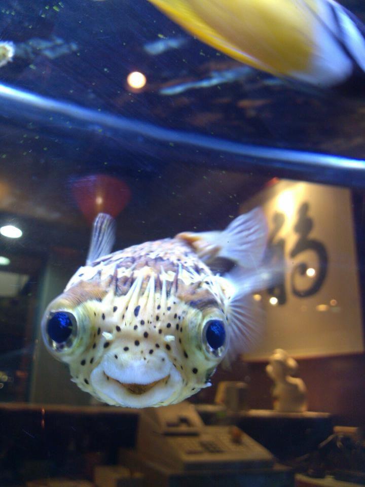 Cute fugu :)