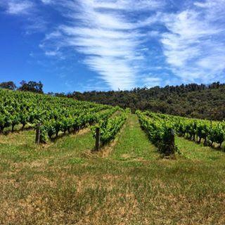 Margaret River Vineyards www.parkmyvan.com.au #ParkMyVan #Australia #Travel #RoadTrip #Backpacking #VanHire #CaravanHire