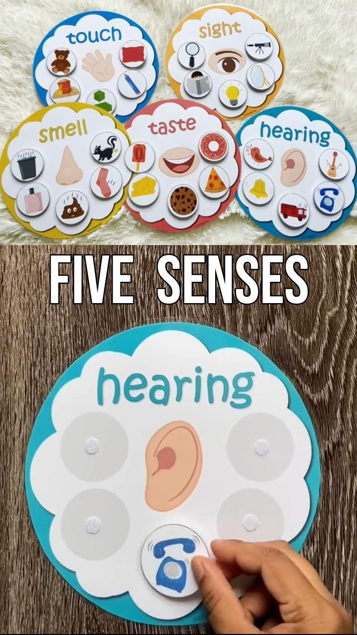 Five senses sorting Activity
