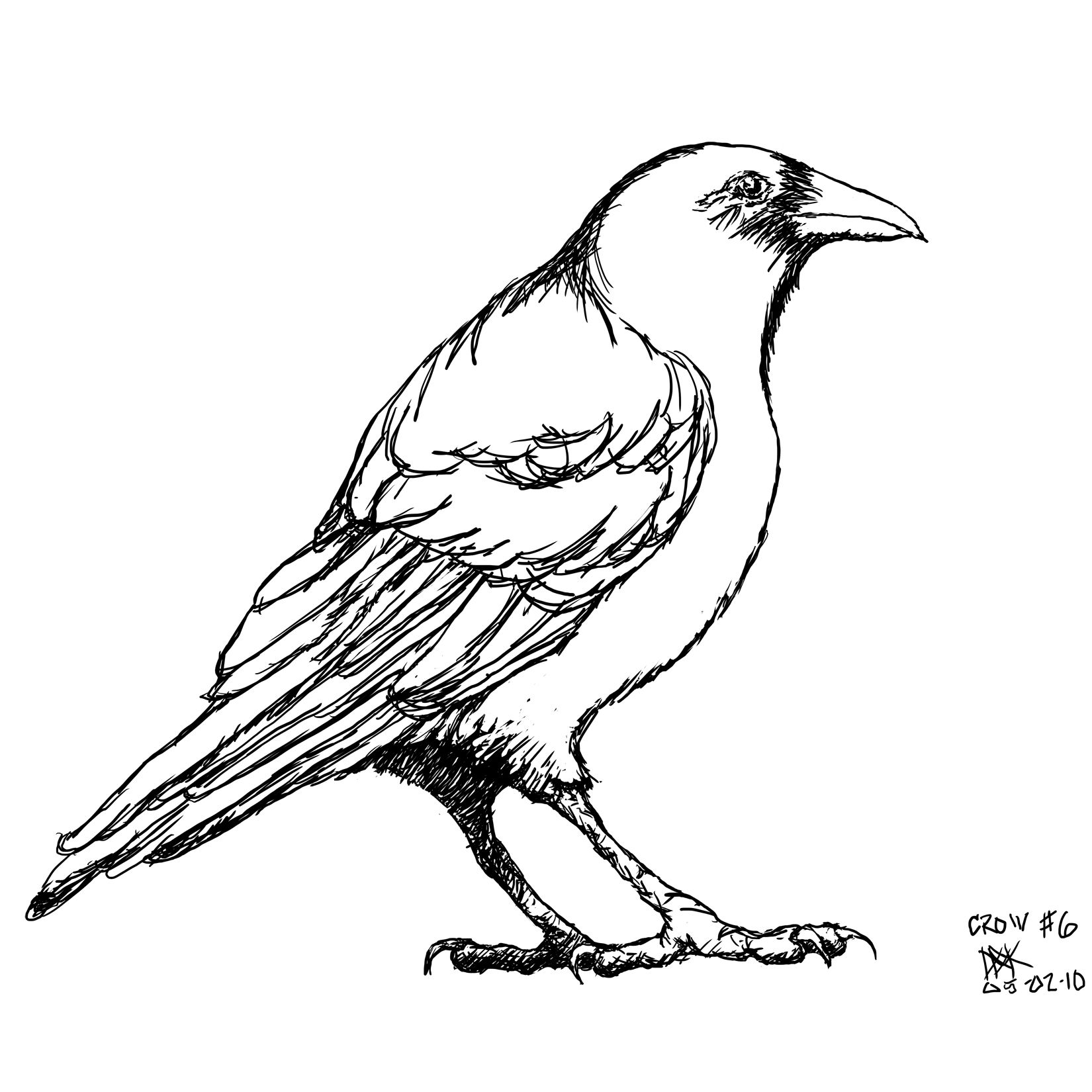 Line Drawing Raven : Crow sm g animals pinterest crows