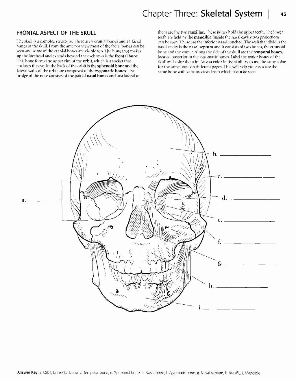 Kaplan Anatomy Coloring Book Beautiful Millie Marotta ...