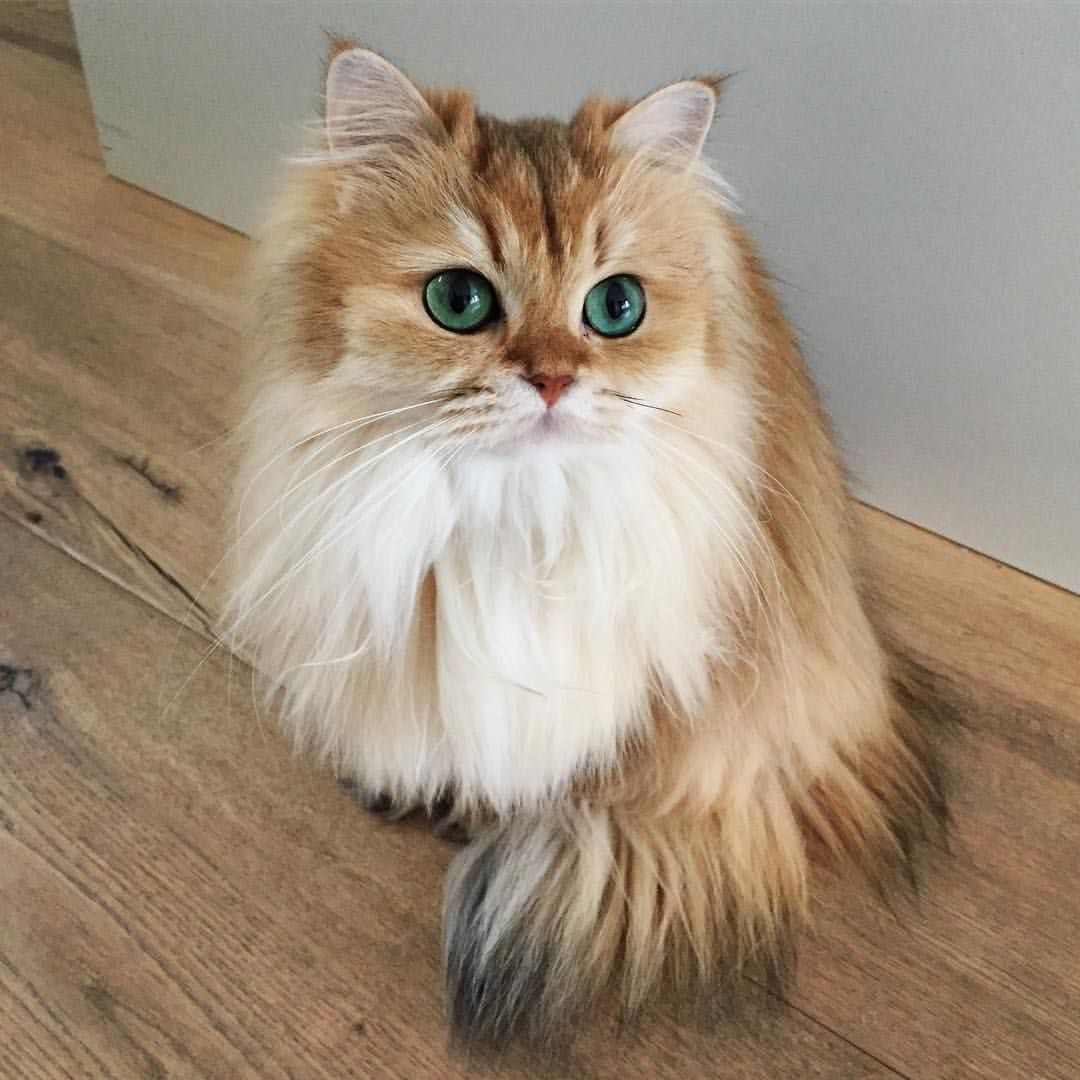 60 3k Likes 360 Comments Smoothiethecat On Instagram Tip