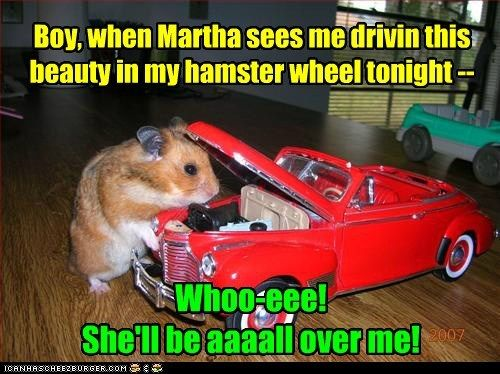 Cost me Only Elebenty Cobs a Corm Funny hamsters, Cute