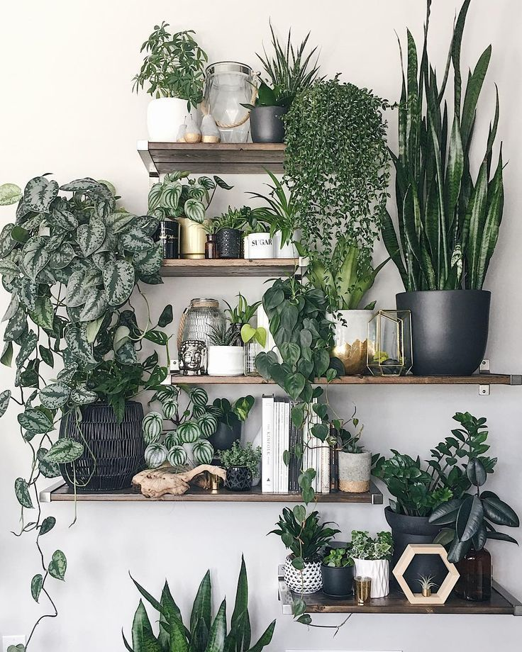 Shelving and display ideas spotted on Instagram offering inspiration for your houseplant collection.