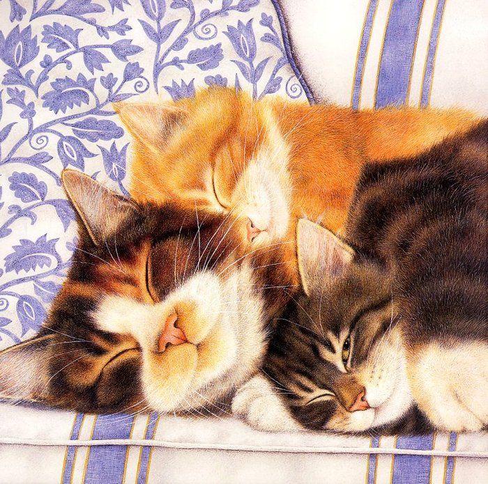 Открытка спящий кот, картинки армейскую тему