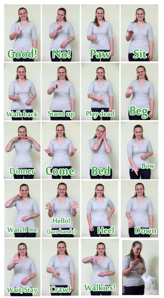 Tricks To Train Your Deaf Dog Pinterest Sign Language