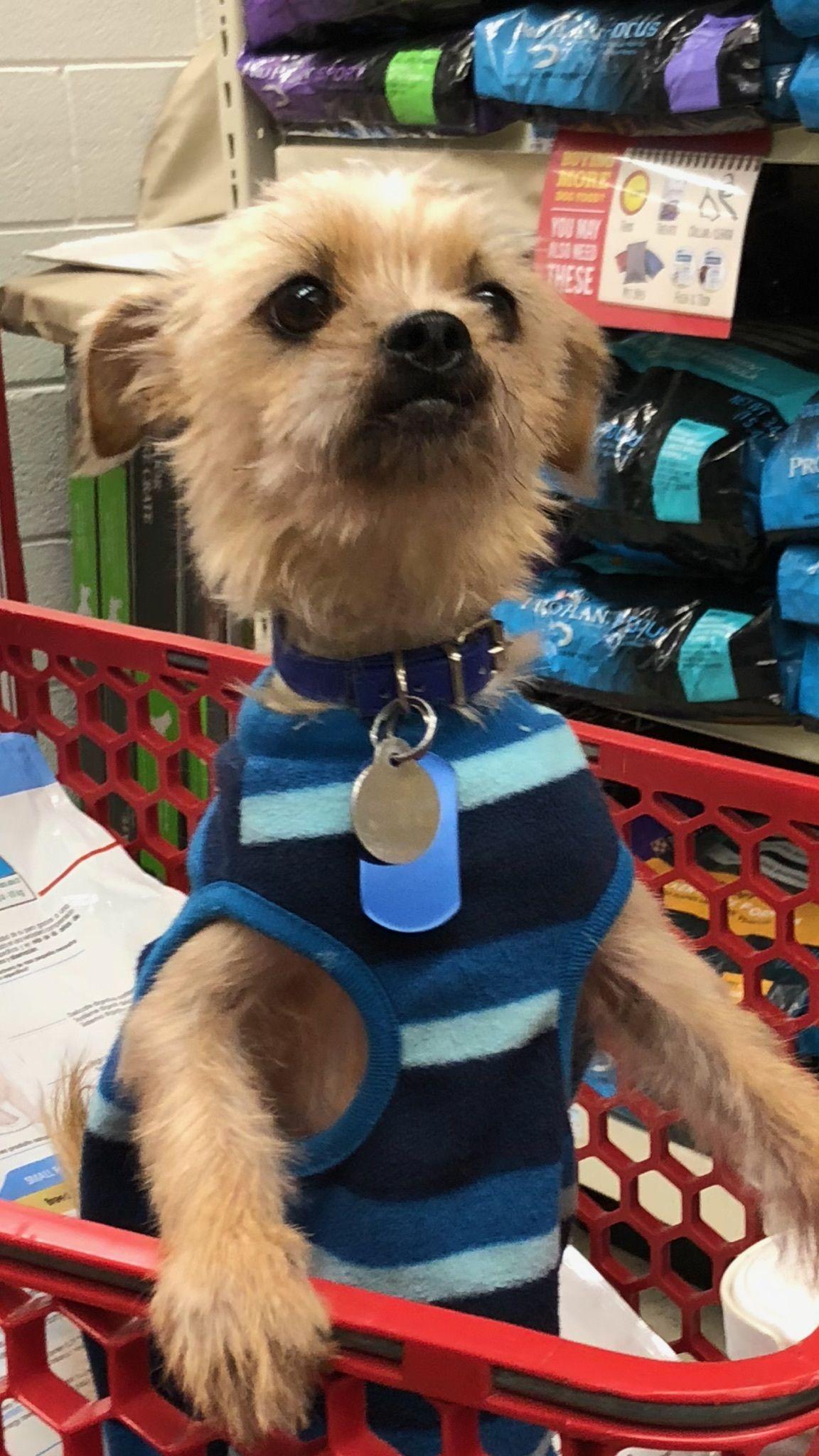 Adopt Shep On Small Dog Rescue Dog Potty Training Dog List