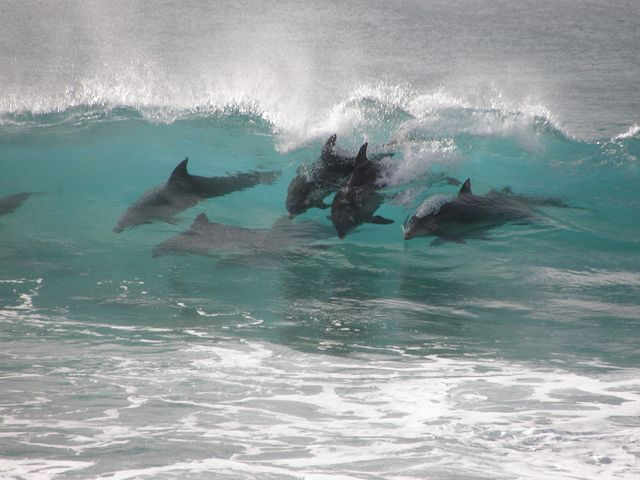 #dolphinssurftoo