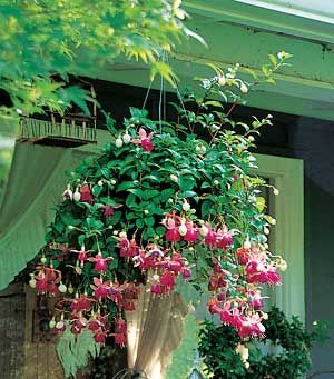 Top Hummingbird Flowers for Hanging Baskets  Try these great blooms in your containers.