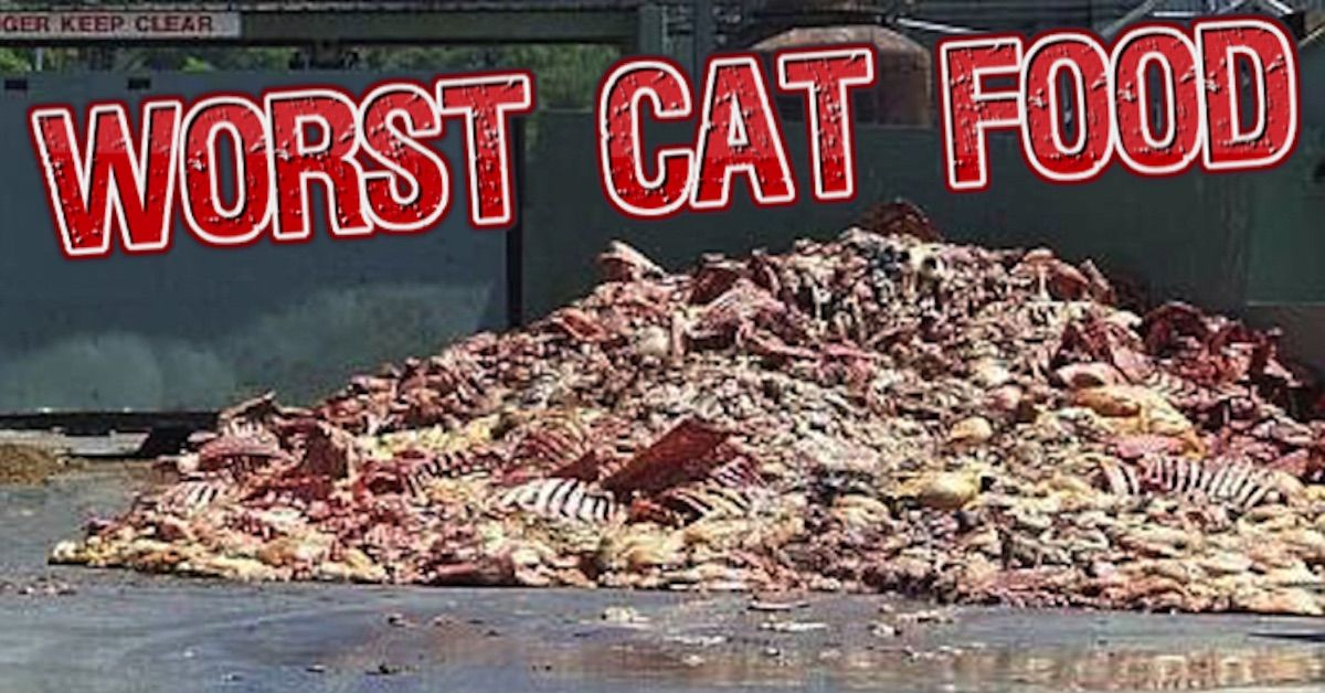 Top 10 Worst Dry Cat Food Brands for 2020 Cat food