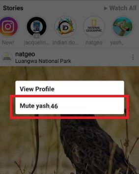 When you mute Instagram story on android phone, view at the