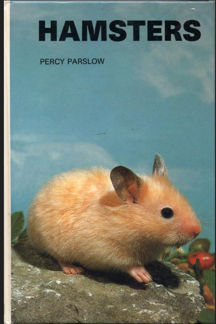 Pin Van Marieke Verbiesen Op Stuff Knaagdieren Hamster Schattig
