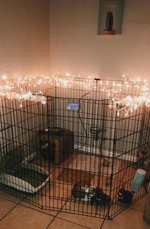 Dog Rabbit Diy Rustic Modern Cute Pet Gate Enclosure Habitat