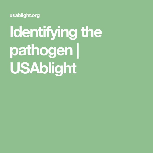 Identifying the pathogen   USAblight