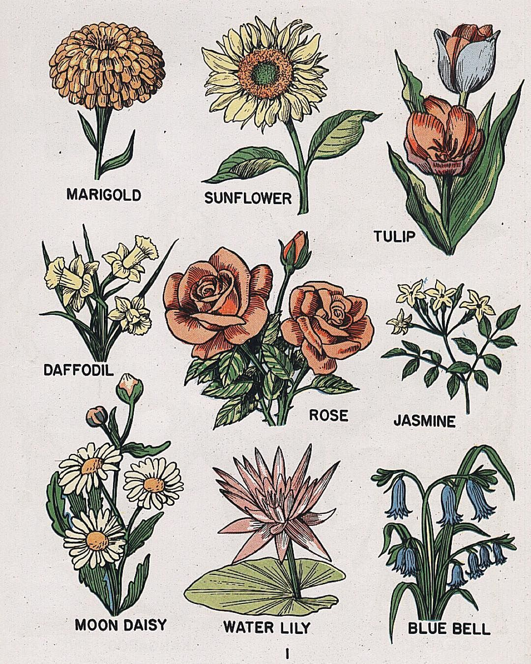 Pin by jasmine york on art pinterest tattoo drawings and artsy inspiration for my floral golden afternoon tattoo izmirmasajfo Images