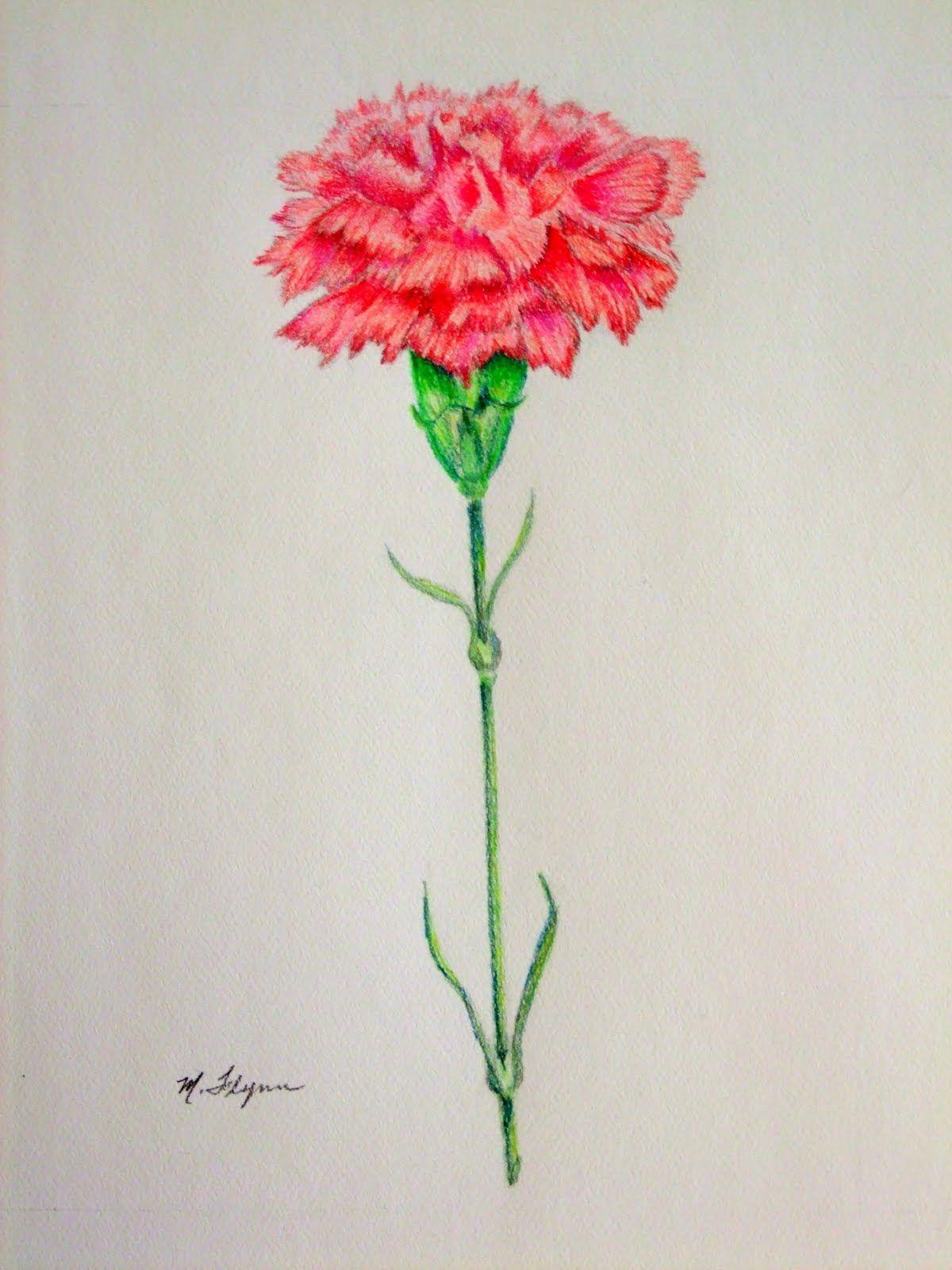 "Carnation Flower Drawing My Artbox ""Carnation"" 9x12"