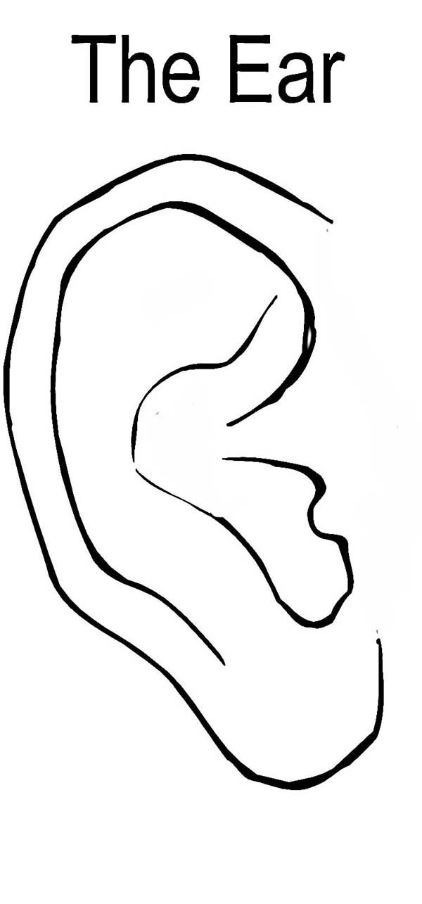 The Ear Coloring Pages Kids Play Color