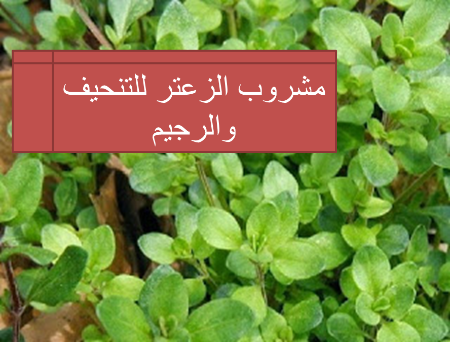 مشروب الزعتر للتنحيف والرجيم Drink Thyme For Slimming Herbs Thyme Drinks