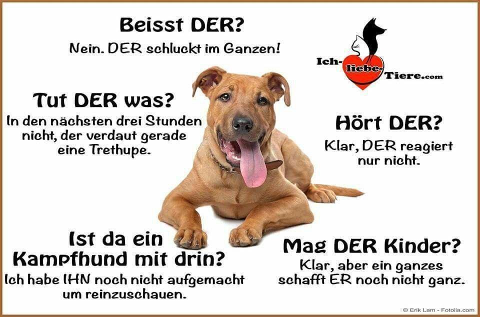 Beisst Der Hort Der Hunde Erziehung Tierisch Lustig Botschaften Mi In 2020 Lustige Tierspruche Hunde Hundeerziehung
