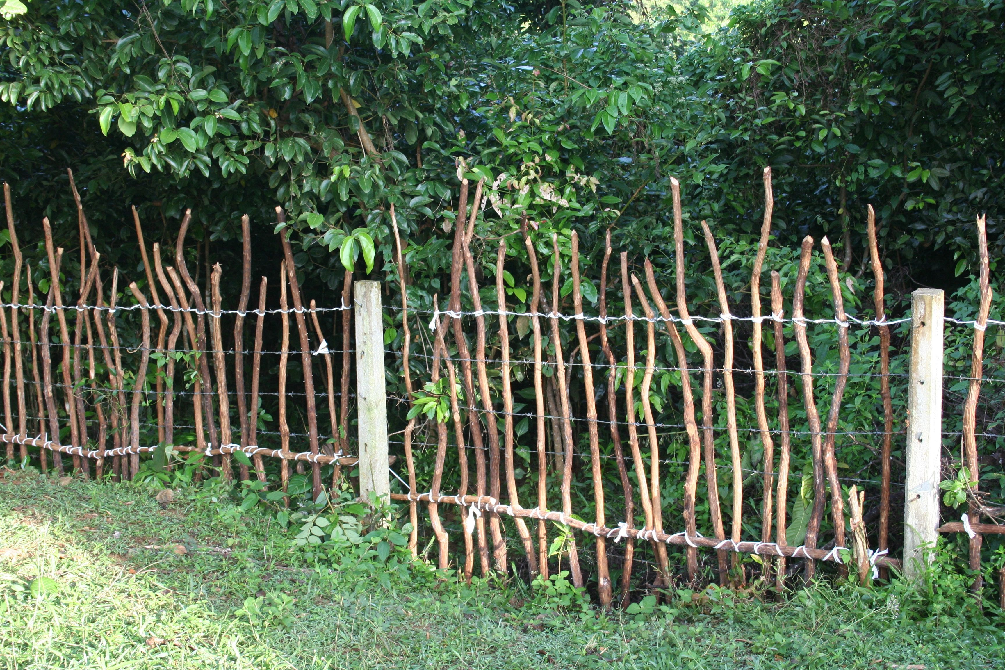 We Reinforce Some Of The Fences With Old Cinnamon Sticks To Keep The Wild Pigs Out