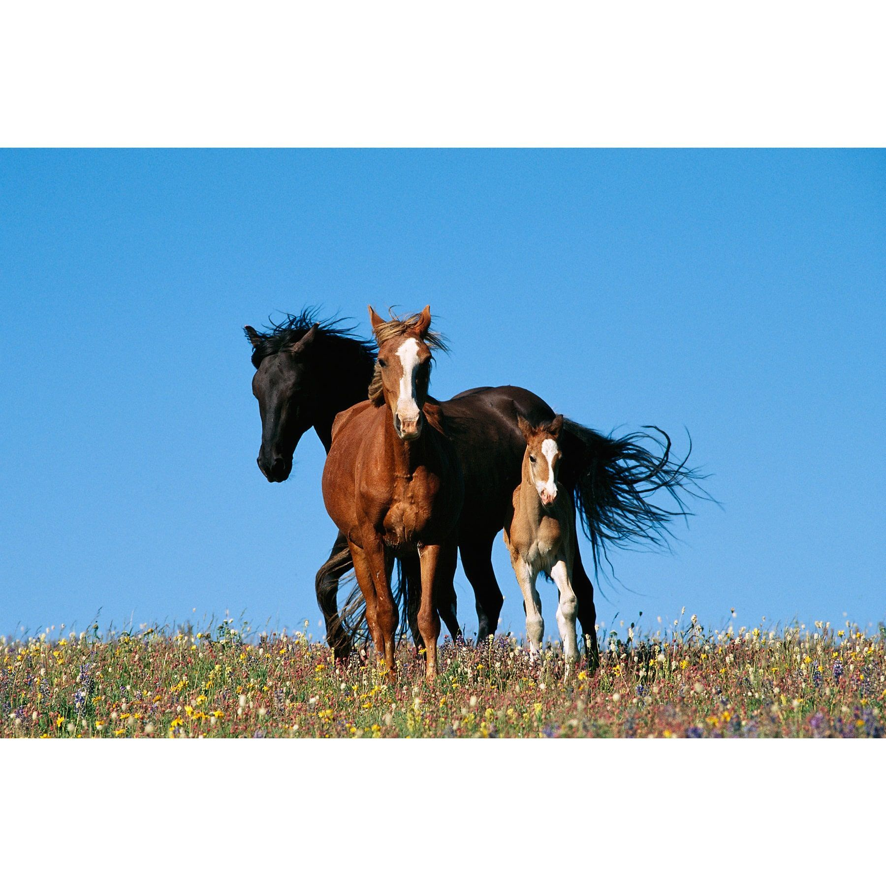 Brewster Wild Horses Wall Mural
