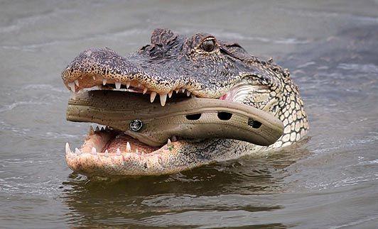 Crocs lover...