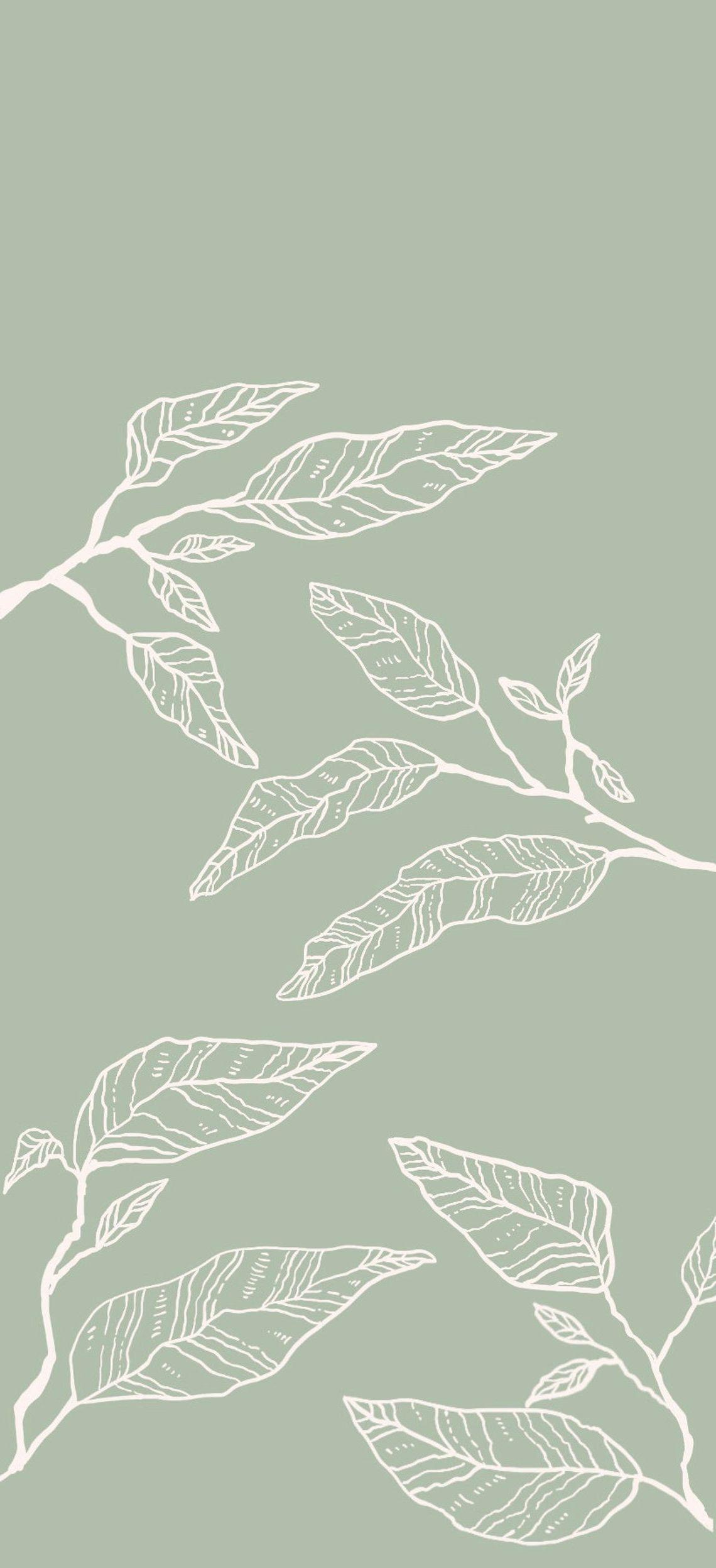 Sage Green Wallpaper - Wallpaper Sun