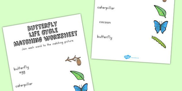 Butterfly Life Cycle Word and Picture Matching Worksheet - match